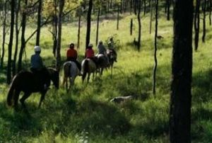 Hunter Valley Horse Riding and Adventures - Accommodation Kalgoorlie